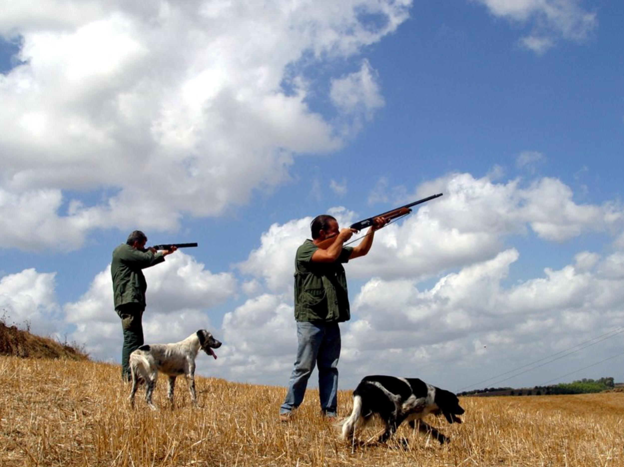I cacciatori si convertano al birdwatching led - Uccelli che sbattono contro le finestre ...